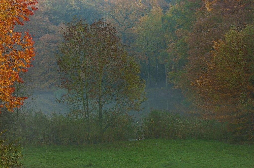German Fall Woods